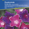 Vrtnarstvo Breskvar - Ipomoea purpurea Picotee Mix