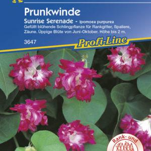 Vrtnarstvo Breskvar - Ipomoea purpurea Sunrise Serenade