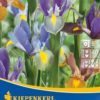 Vrtnarstvo Breskvar - Iris hollandica Mix