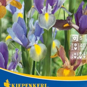 Vrtnarstvo Breskvar - Iris hollandica Mix