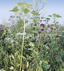 Vrtnarstvo Breskvar - Kiepenkerl Game Bird Mixture Flower Magic