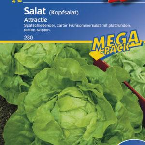 Vrtnarstvo Breskvar - Lactuca Sativa Attractie Mega Pack