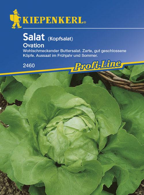 Vrtnarstvo Breskvar - Lactuca sativa Ovation