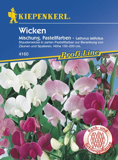 Vrtnarstvo Breskvar - Lathyrus latifolius Patellfarben Mix