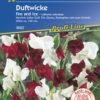 Vrtnarstvo Breskvar - Lathyrus odoratus Fire and Ice