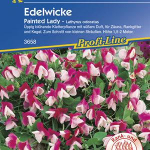 Vrtnarstvo Breskvar - Lathyrus odoratus Painted Lady