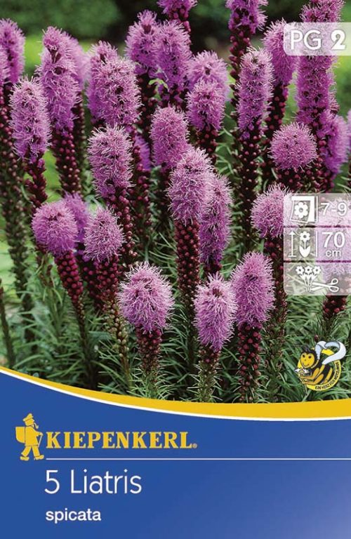 Vrtnarstvo Breskvar - Latris Spicata