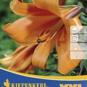 Vrtnarstvo Breskvar - Lilium African Queen