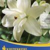 Vrtnarstvo Breskvar - Lilium Anne Maries Dream