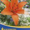 Vrtnarstvo Breskvar - Lilium Orange County