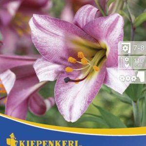 Vrtnarstvo Breskvar - Lilium Pink Perfection