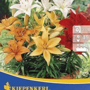 Vrtnarstvo Breskvar - Lilium Pixie Mix