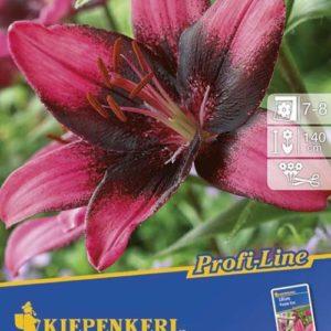 Vrtnarstvo Breskvar - Lilium Purple Eye
