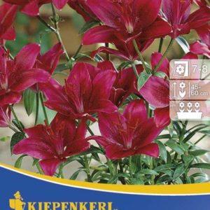 Vrtnarstvo Breskvar - Lilium Sweet Lord
