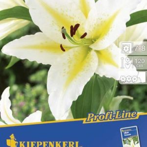 Vrtnarstvo Breskvar - Lilium Venezuela