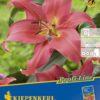 Vrtnarstvo Breskvar - Lilium Visa Versa