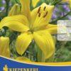 Vrtnarstvo Breskvar - Lilium Yellow County