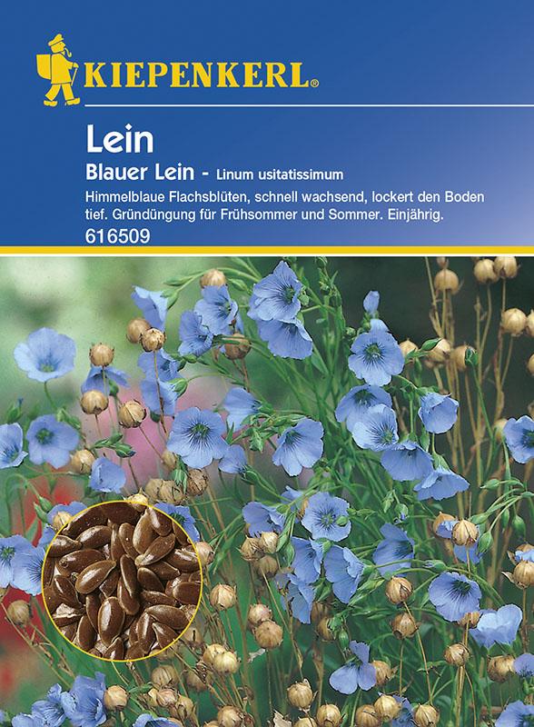 Vrtnarstvo Breskvar - Linum usitatissimum Blauer
