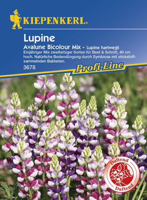 Vrtnarstvo Breskvar - Lupinus hartwegii Avalune Bicolor Mix