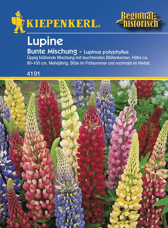 Vrtnarstvo Breskvar - Lupinus polyphyllus Bunte Mix