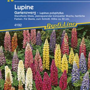 Vrtnarstvo Breskvar - Lupinus polyphyllus Gartenzwerg