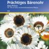 Vrtnarstvo Breskvar - Marttis fastuosa Zulu Prince