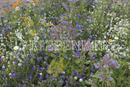 Vrtnarstvo Breskvar - Meadow for Beneficial Insects