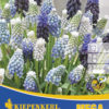 Vrtnarstvo Breskvar - Muscari Mix Mega Pack
