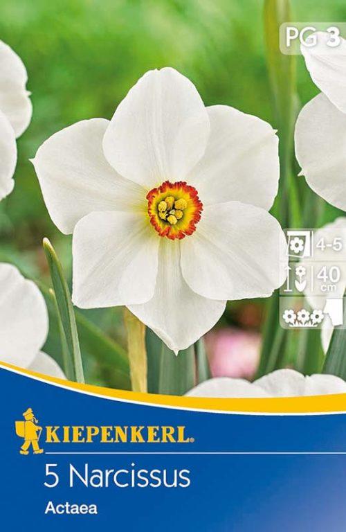 Vrtnarstvo Breskvar - Narcissus Actaea