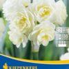 Vrtnarstvo Breskvar - Narcissus Cheerfulness