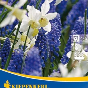 Vrtnarstvo Breskvar - Narcissus & Muscari White & Blue Passion
