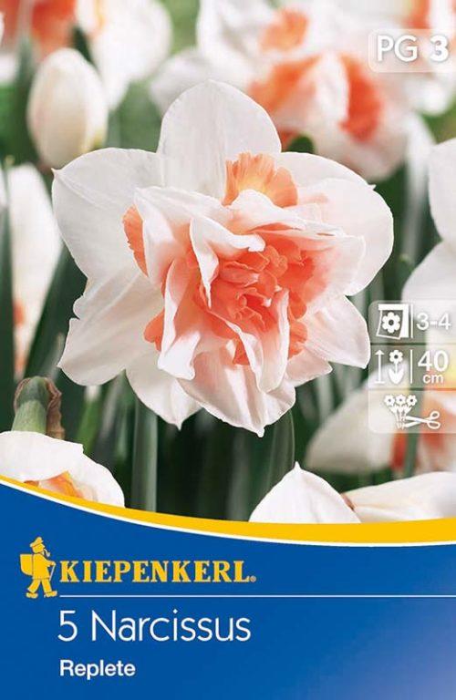 Vrtnarstvo Breskvar - Narcissus Replete