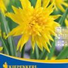 Vrtnarstvo Breskvar - Narcissus Rip van Winkle