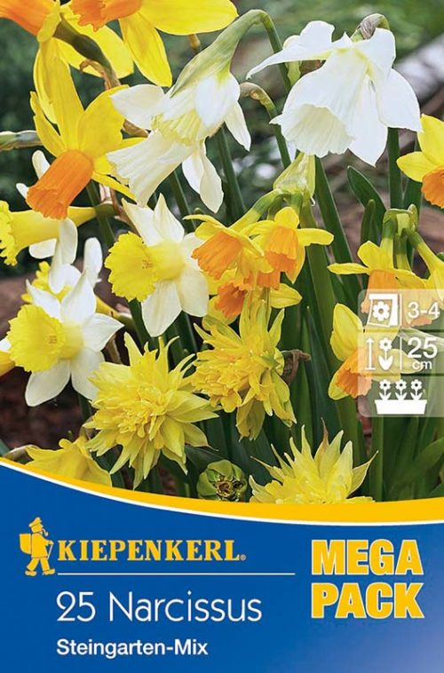 Vrtnarstvo Breskvar - Narcissus Steingarten Mix mega pack