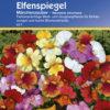 Vrtnarstvo Breskvar - Nemesia strumosa Märchenzauber