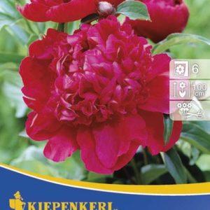 Vrtnarstvo Breskvar - Paeonia Inspecteur Lavergne