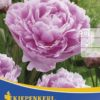 Vrtnarstvo Breskvar - Paeonia Sarah Bernhardt