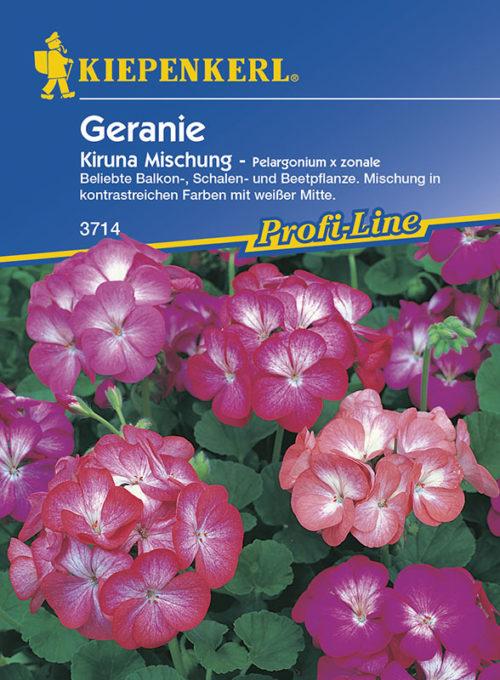 Vrtnarstvo Breskvar - Pelargonium zonale Kiruna Mix