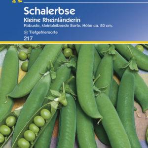 Vrtnarstvo Breskvar - Pisum sativum Kleine Rheinländerin