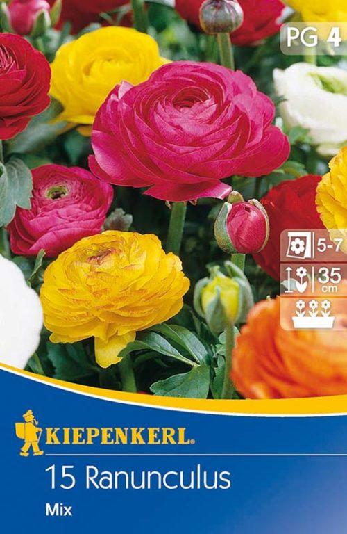 Vrtnarstvo Breskvar - Ranunculus Mix