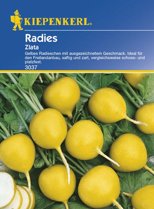 Vrtnarstvo Breskvar - Raphanus sativus Zlata