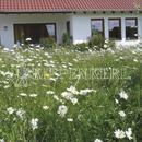 Vrtnarstvo Breskvar - Rieger Hofman Flower and Herb Lawn