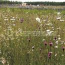 Vrtnarstvo Breskvar - Biotop - Rieger Hofman Nutrient-Poor Lawn