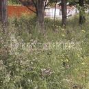 Vrtnarstvo Breskvar - Biotop - Rieger Hofman Shady Lawn