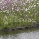 Vrtnarstvo Breskvar - Biotop - Rieger Hofman Waterside Mixture