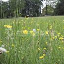 Vrtnarstvo Breskvar - Biotop - RSM 812 - Biotope Areas