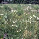 Vrtnarstvo Breskvar - Biotop - RSM 813 - Biotope Areas
