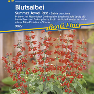 Vrtnarstvo Breskvar - Salvia coccinea Summer Jewel Red