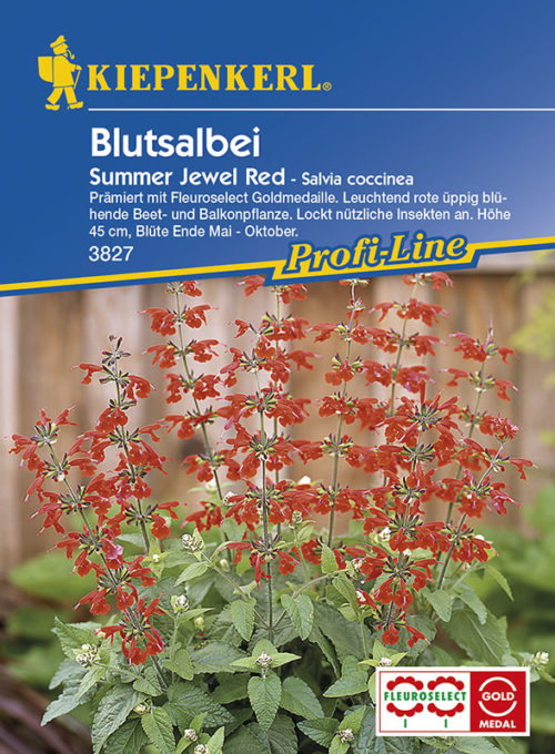 Vrtnarstvo Breskvar - Salvia coccinea Summer Jewel Red