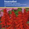Vrtnarstvo Breskvar - Salvia splendens Johannisfeuer